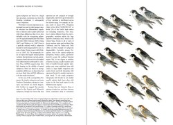 Peregrine Falcons of the World sample page